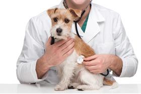 Consulenza Veterinario