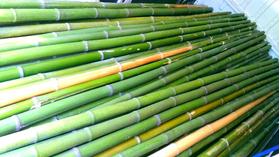 Vendo canne di bambù bambu con diametro da 1 cm. fino a 10 c